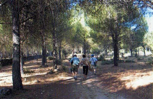 Paseo al paraje de Las Juntas - La Adrada